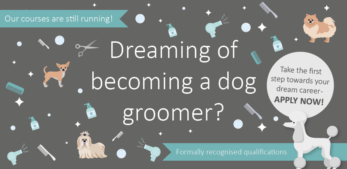 Dog Grooming Courses now available