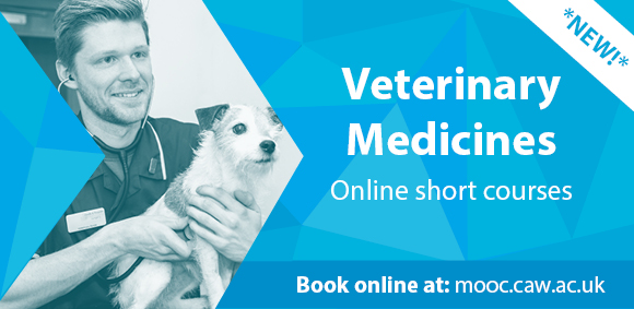 online veterinary courses