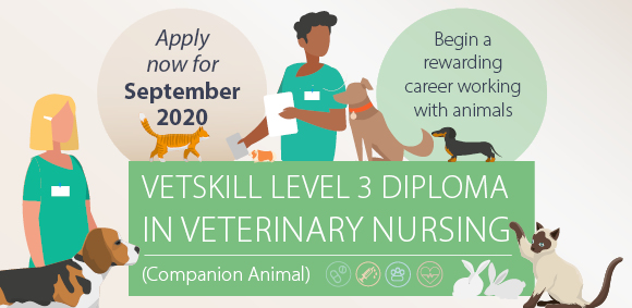 Veterinary Nursing Level 3 course starting in September 2020