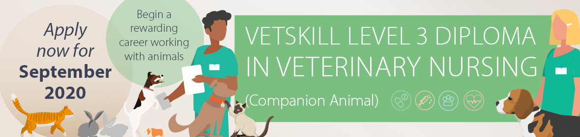 VetSkill Veterinary Nursing Level 3 course starting in September 2020
