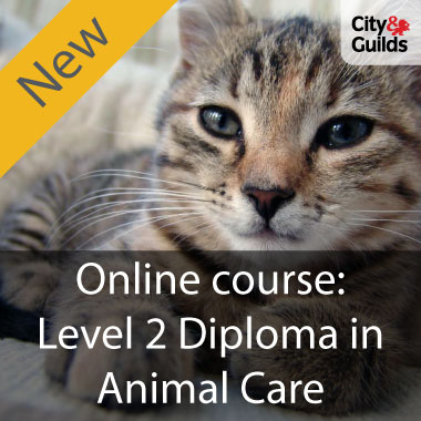Level 2 Diploma - Animal Care online course