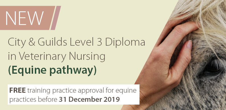 New Veterinary Nurse Equine Pathway