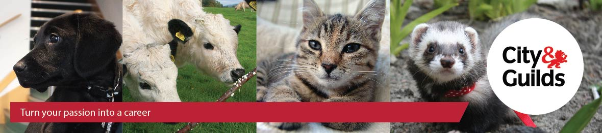 Course: Level 1 Diploma in Work-based Animal Care