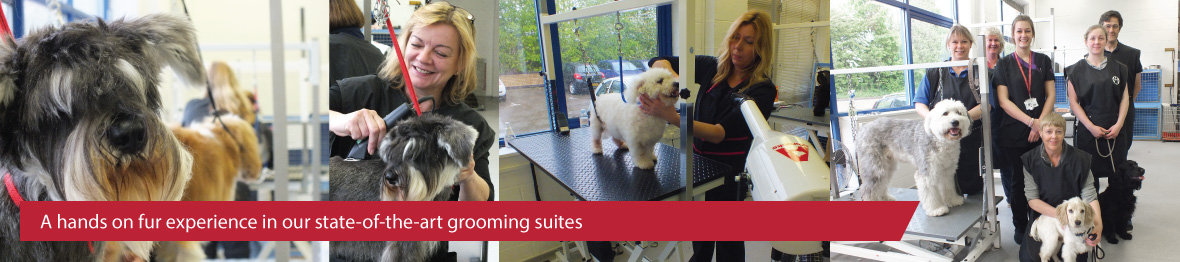 Course: Level 3 Diploma in Dog Grooming
