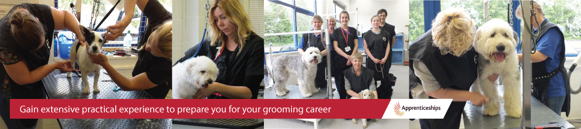 Course: Dog Grooming Apprenticeship (Level 2 Diploma)
