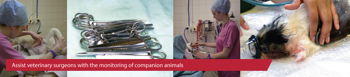 Course: Level 2 Certificate in Assisting Veterinary Surgeons in the Monitoring of Animal Patients Under Anaesthesia and Sedation