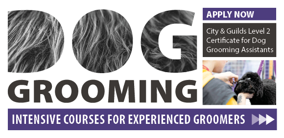 Fast track dog grooming course now available