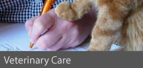 Veterinary Care courses