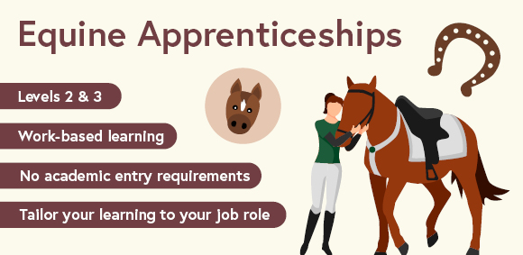 Equine apprenticeship courses at level 2 and 3
