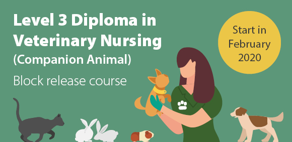 Veterinary Nursing course starts in February 2020 (block release)
