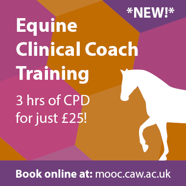 Clinical Coach equine course