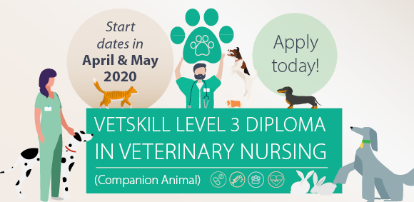 Veterinary Nursing Level 3 course starting in April and May 2020