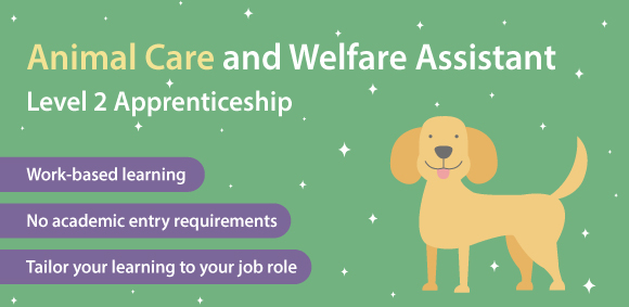 Animal Care and Welfare Assistant Level 2 Apprenticeship course