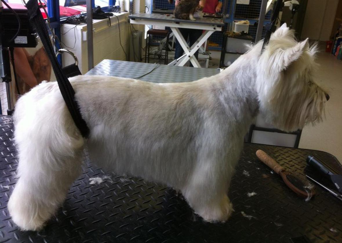 Dog Grooming Courses Leeds