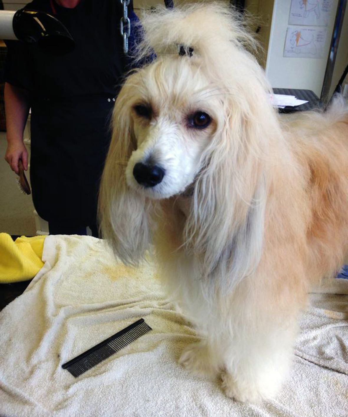 Dog Grooming Courses Wales