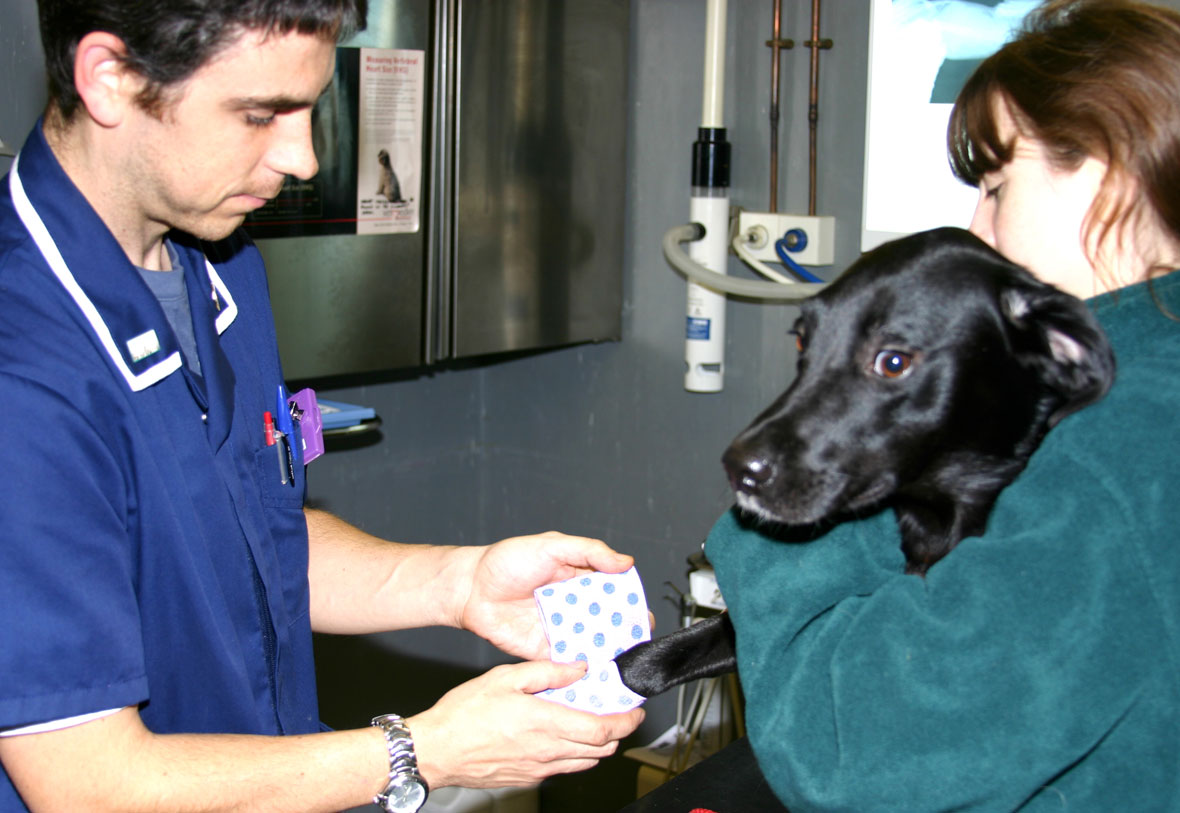 Veterinary Assistant subjects in accounting