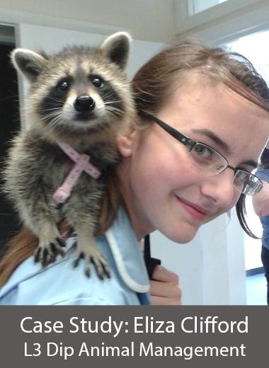 my dream becoming a veterinarian essay
