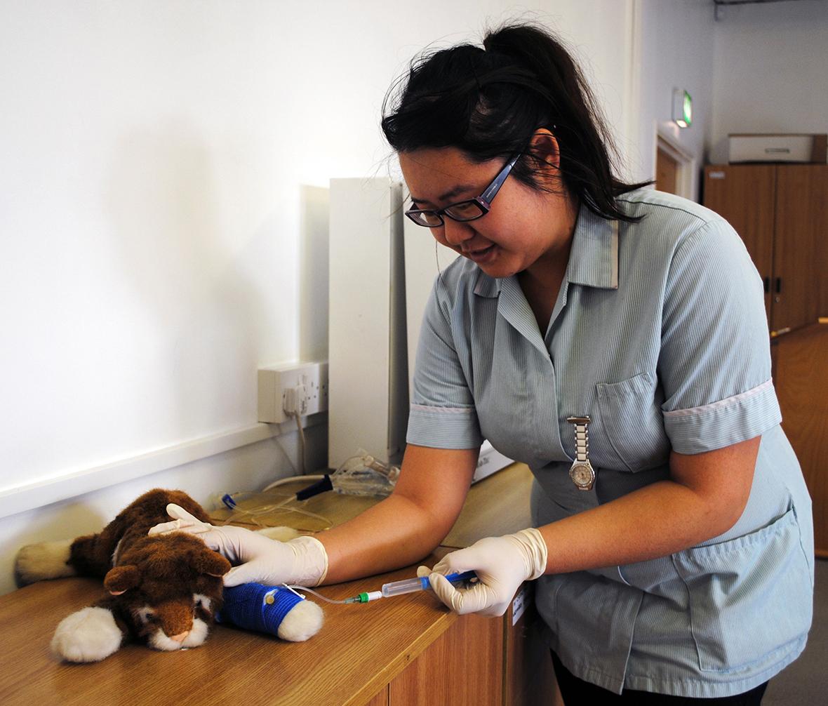 veterinary nurse how to become