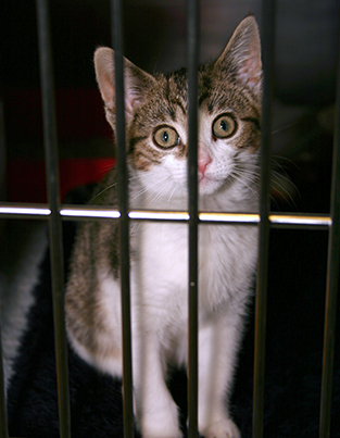 Cat in a veterinary cat kennel