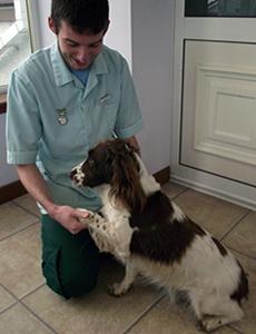Craig McPhee with a Springer Spaniel