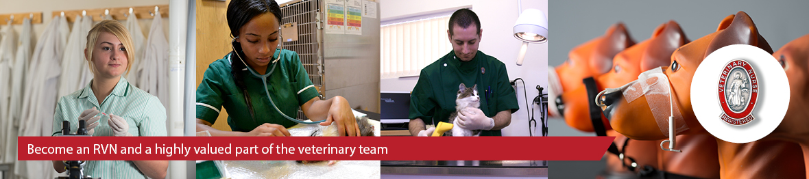 Course: FdSc Veterinary Nursing (Royal Veterinary College)