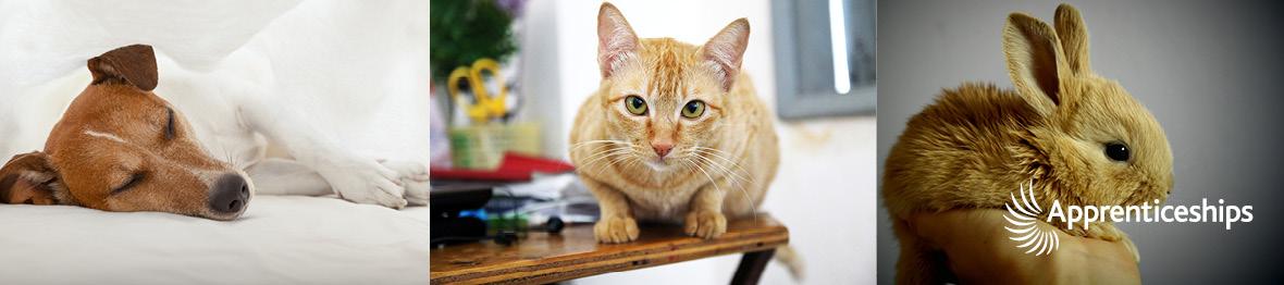 Course: Advanced Apprenticeship in Animal Care
