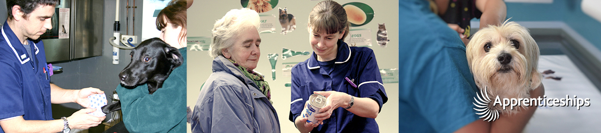 Course: Intermediate Apprenticeship for Veterinary Care Assistants