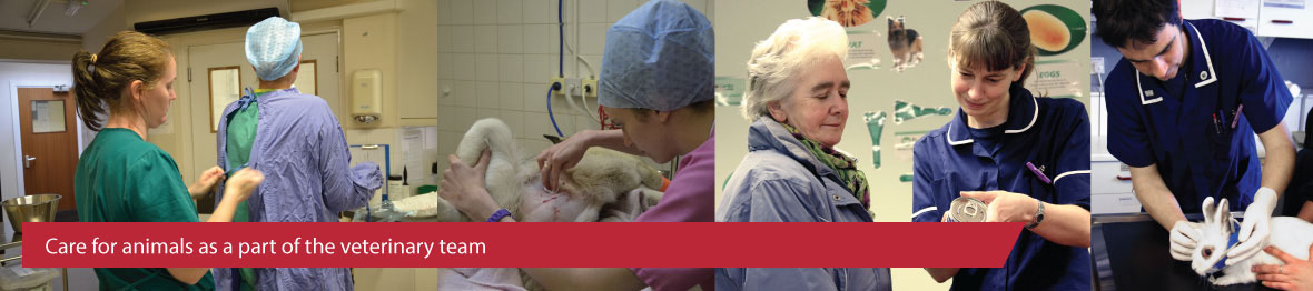 Course: Level 2 Diploma for Veterinary Care Assistants