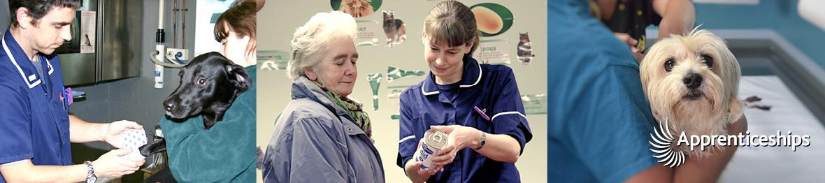 Course: Intermediate Apprenticeship for Veterinary Care Assistants