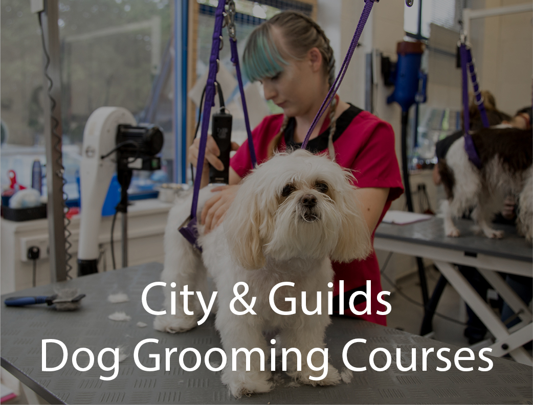 Dog Grooming Services And Courses Caw