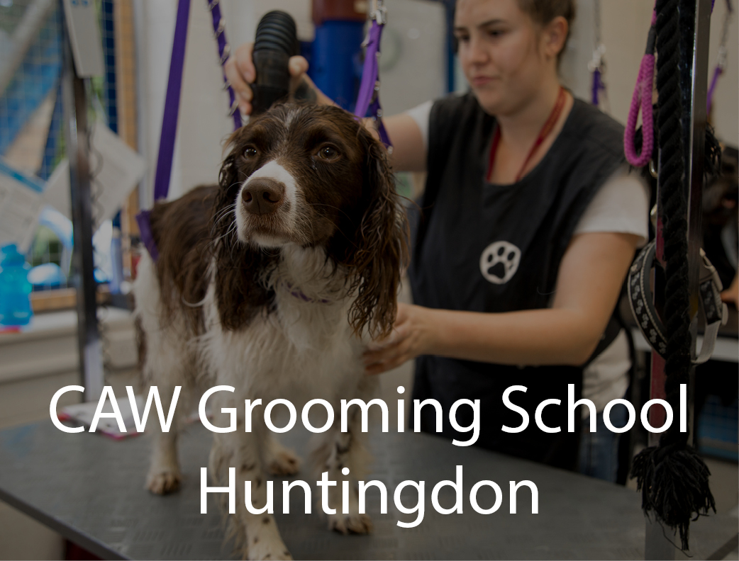 Dog Grooming Courses Uk City And Guilds