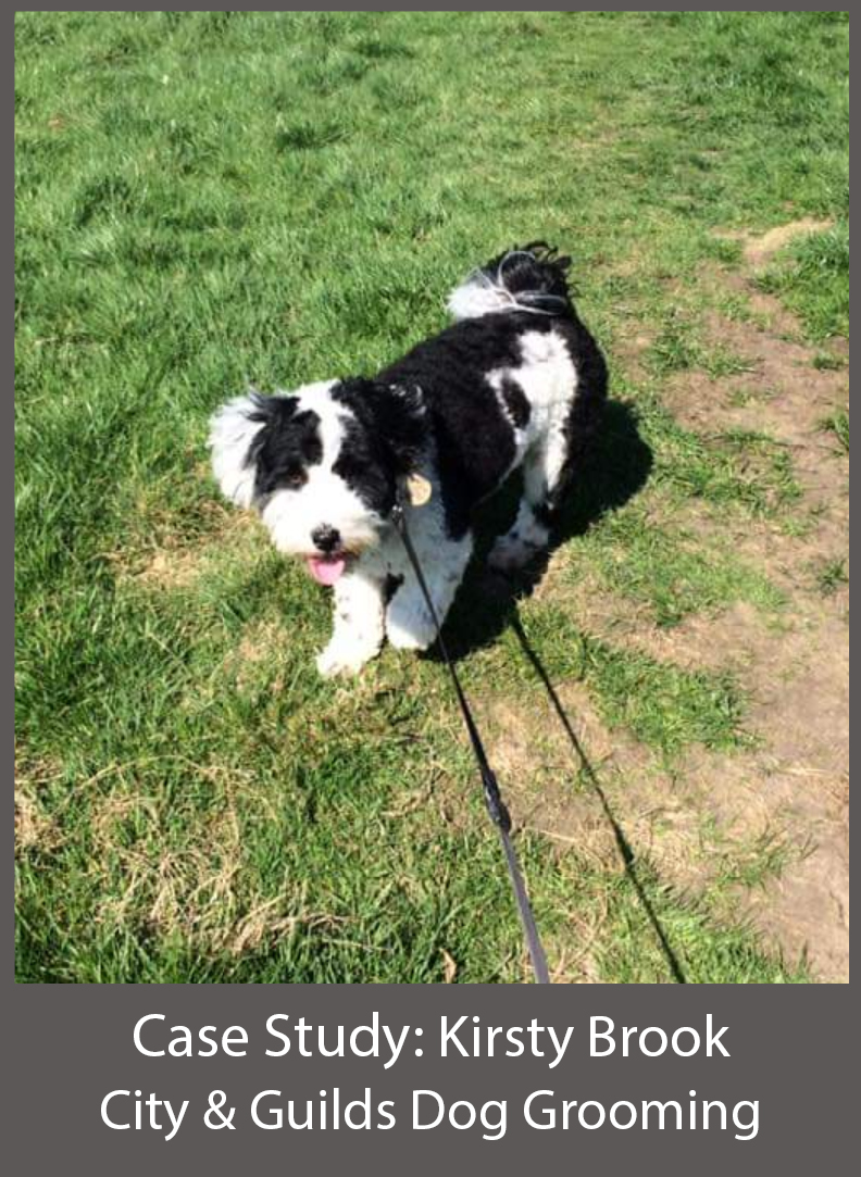 Kirsty Brook Dog Grooming