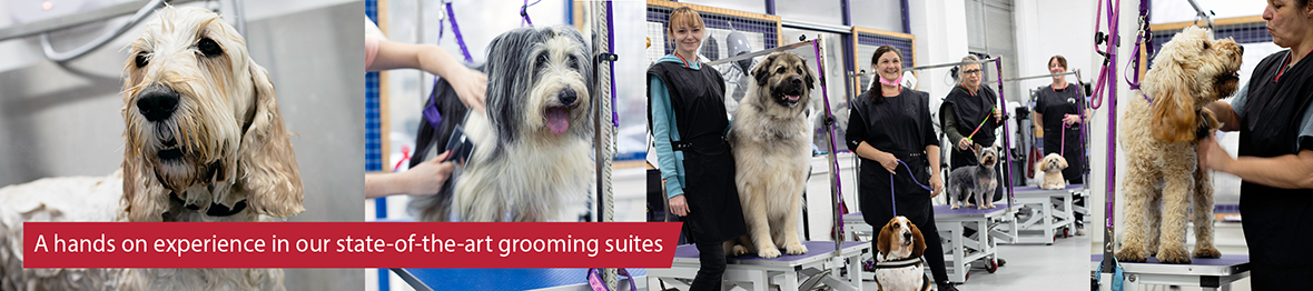 Course: City & Guilds Level 2 Certificate for Dog Grooming Assistants: Intensive for Experienced Groomers