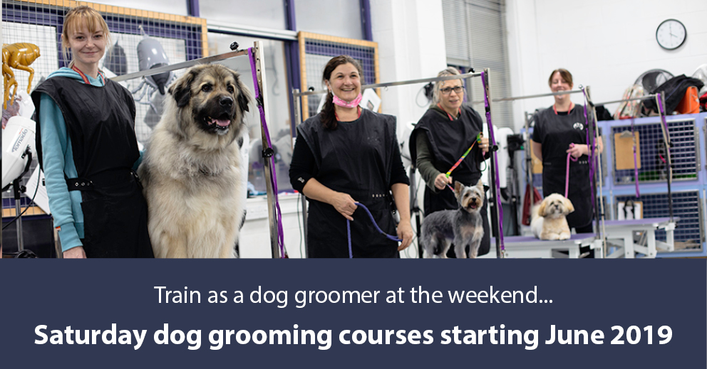 Level 2 Certificate For Dog Grooming Assistants Caw