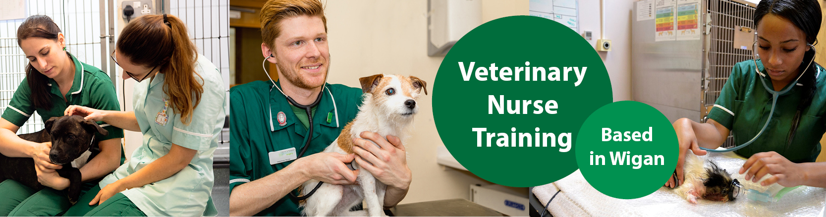Veterinary nurse training in Wigan