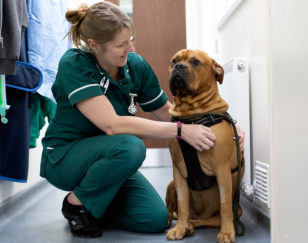 BSc Honours Veterinary Nursing Top-Up Degree  (Middlesex University) – Coming soon!
