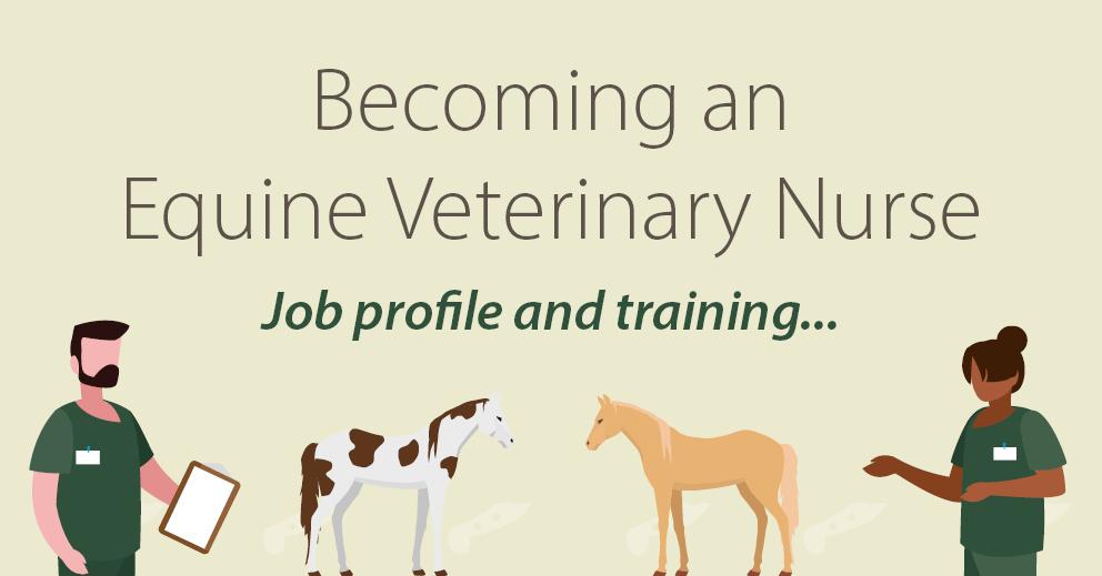 Veterinary Nurse (Equine) | CAW Careers Advice