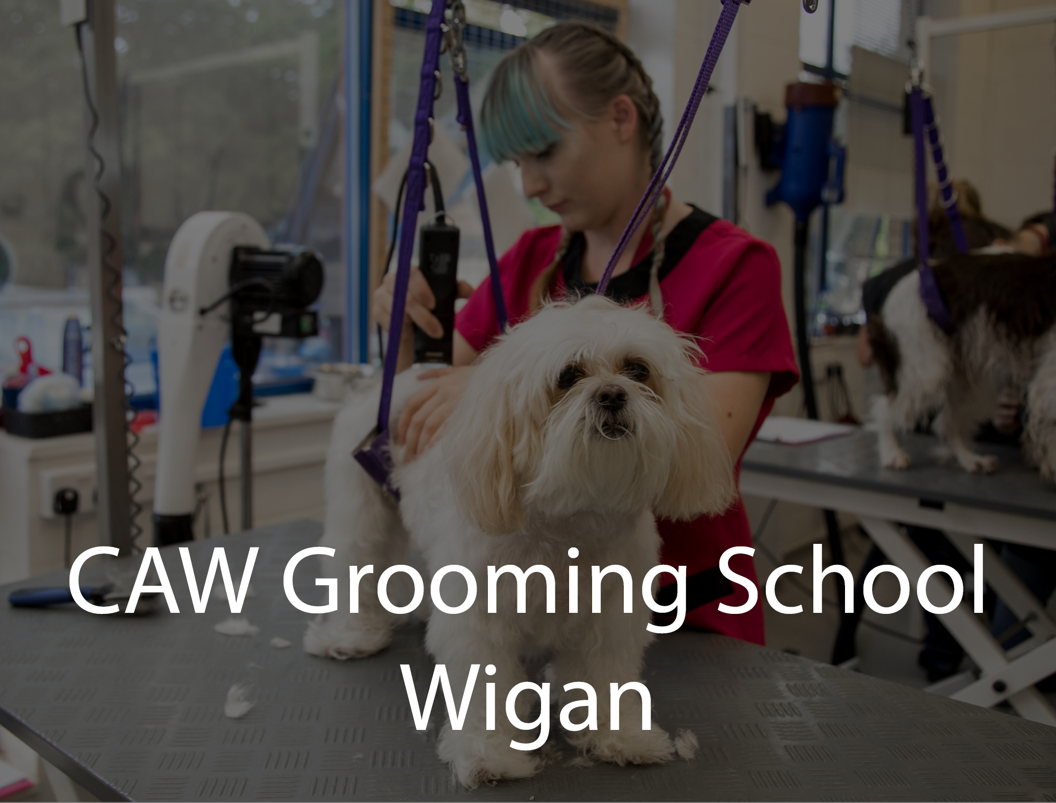 Dog Grooming Wigan