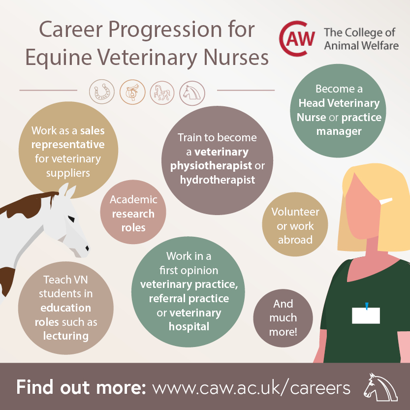 Career Progression for Equine Veterinary Nurses Social Image
