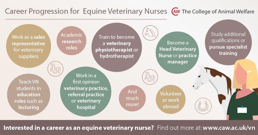 Career Progression for Equine Veterinary Nurses Social Media Image - Rectangle