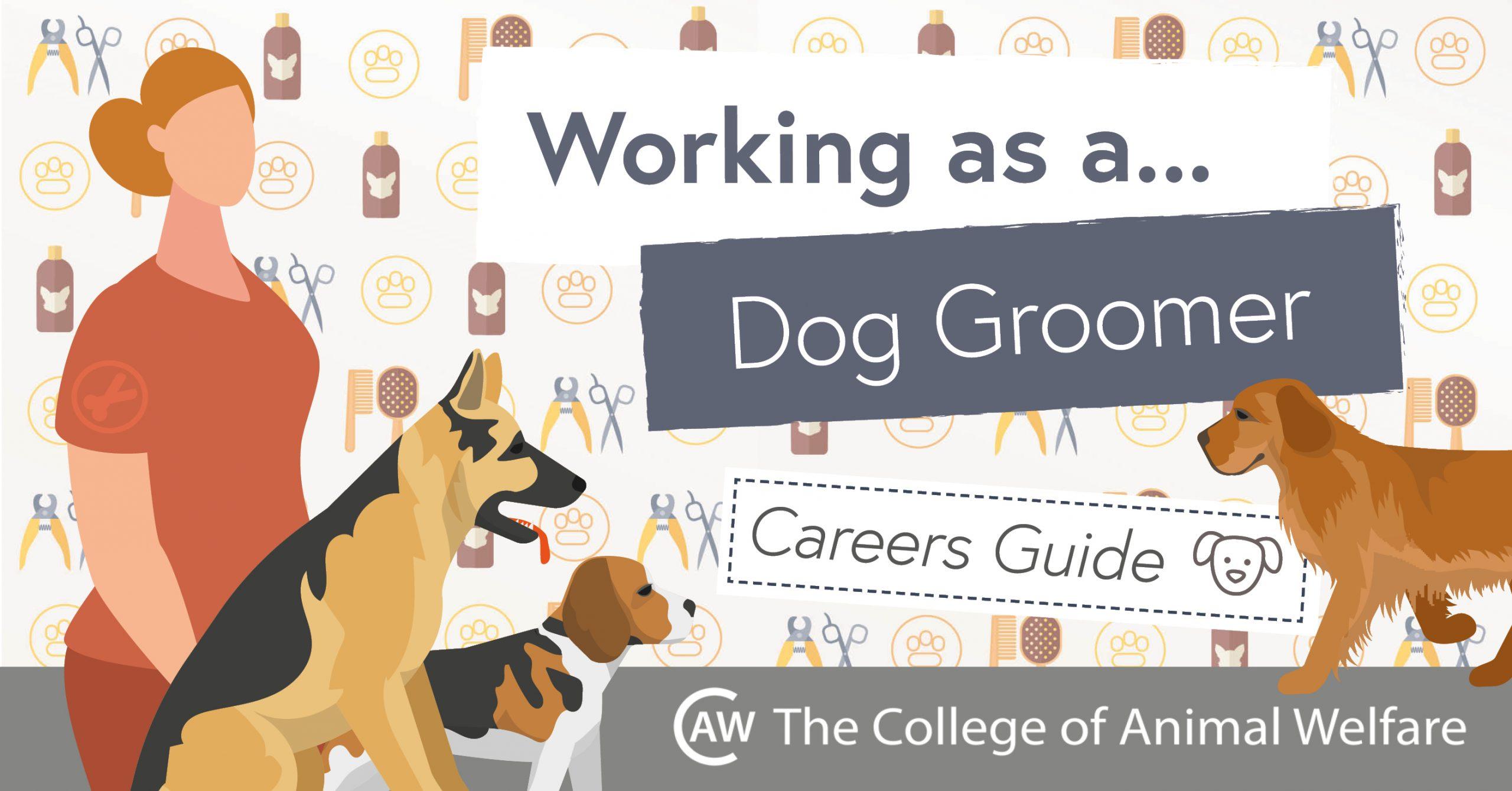 Dog Grooming Career Guide
