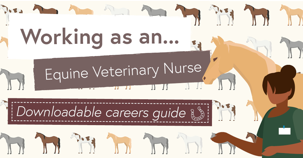 Equine Veterinary Nursing Careers Advice
