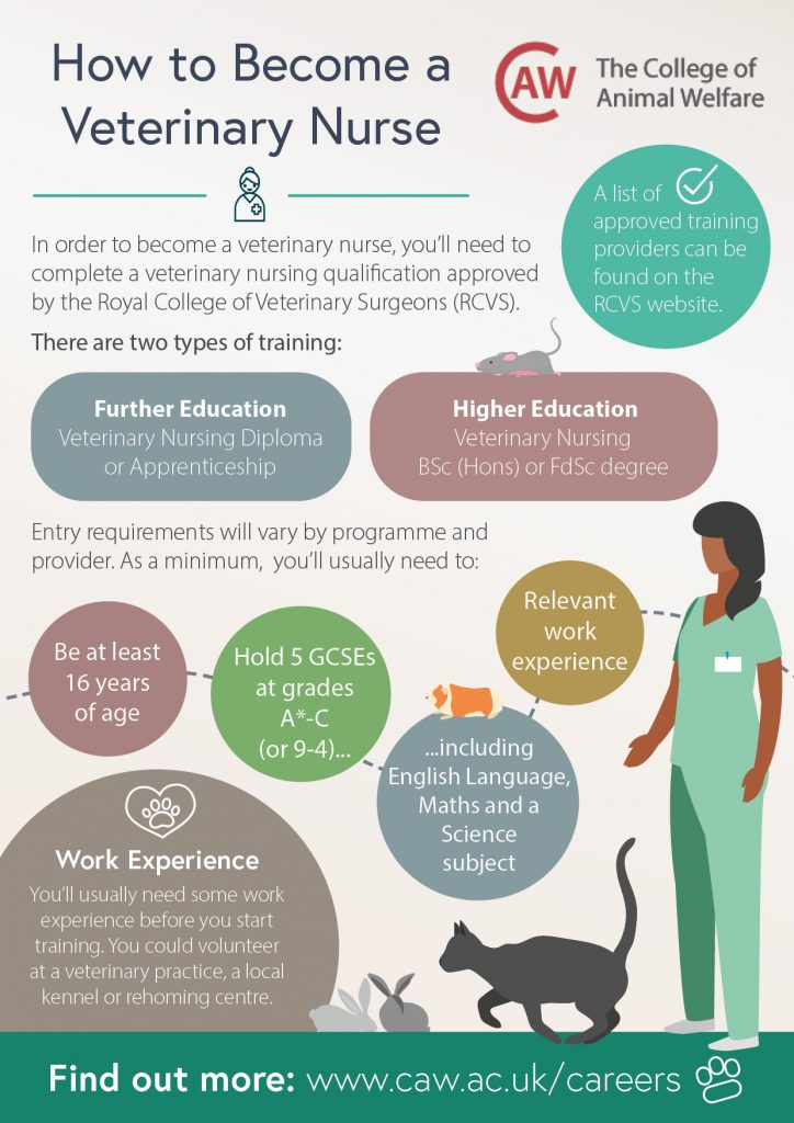 How to Become a Veterinary Nurse Poster