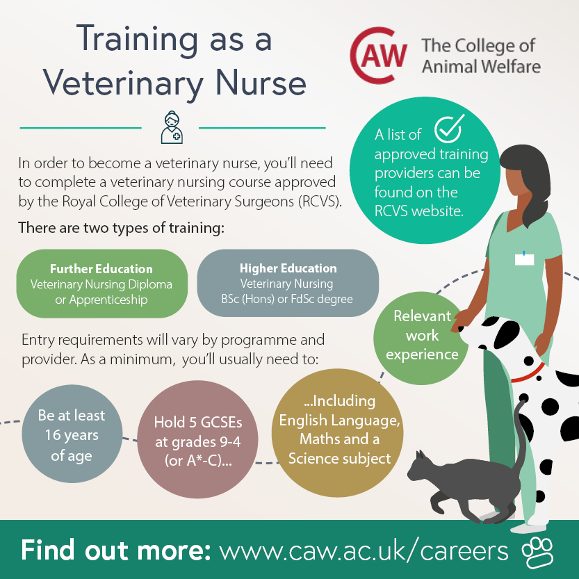 How to Become a Veterinary Nurse Social Image