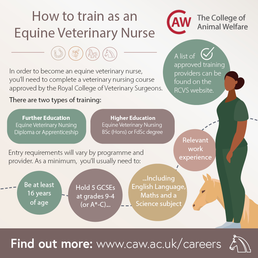 How to Become an Equine Veterinary Nurse Social Image