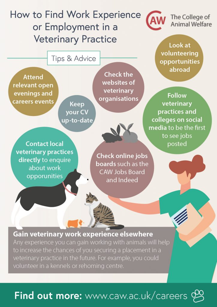 How to Find Work in a Veterinary Practice Poster