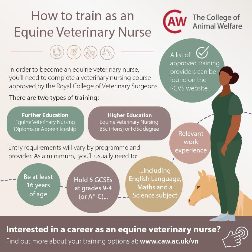 How to Train as an Equine Veterinary Nurse Social Media Image - Square
