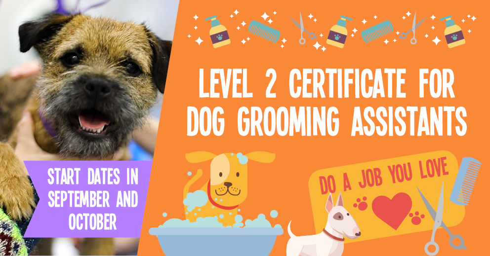 Level 2 Certificate for Dog Grooming Assistants