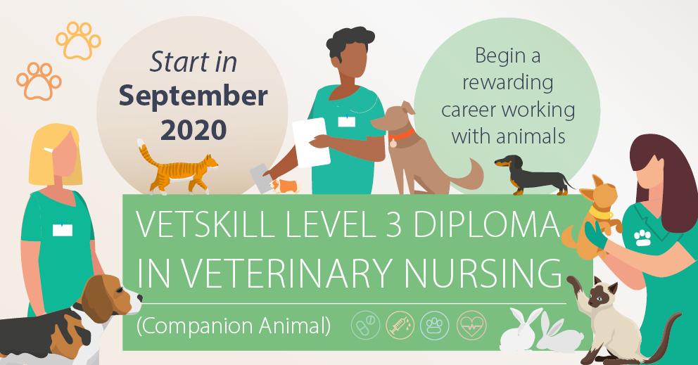 VetSkill Level 3 Diploma in Veterinary Nursing | CAW