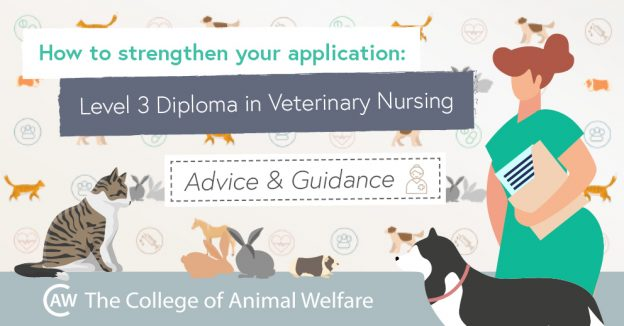 Strengthen your veterinary nursing application